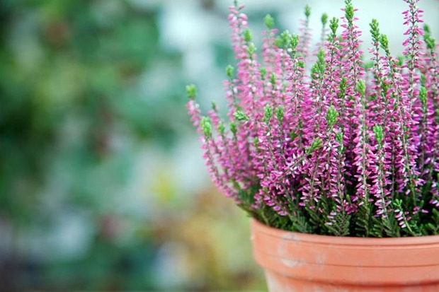 Nys Fleurs - fleuriste